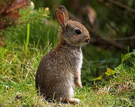 Как встречать 2011 год - год кролика