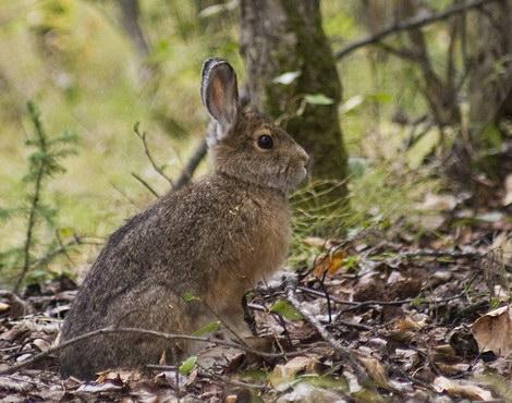 Год зайца - как встречать