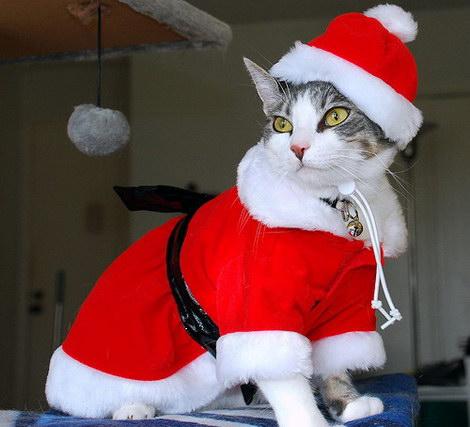 Новый 2011 год - Год кота